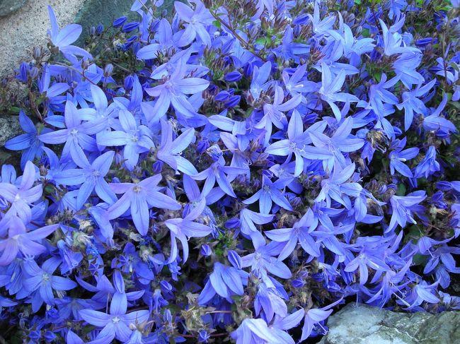 東京や北海道で撮影したお花の写真<br />名前の知らないお花もありますが、記念として撮影した場所だけ書いておきます。