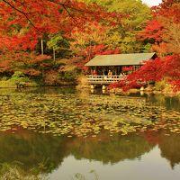 紅葉もいよいよフィナーレの東山植物園紅葉狩りと東海の森ウォーク♪