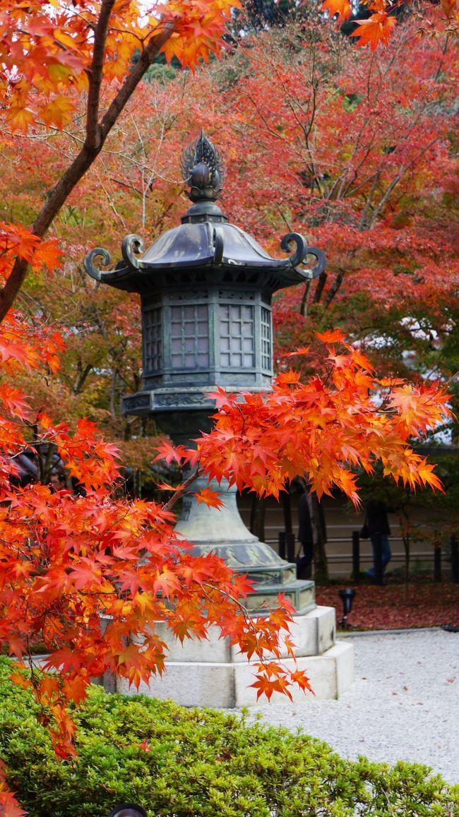 3日目<br /><br />今年(2015年)はどうも紅葉がイマイチなので、紅葉にこだわらず京都の町をぶらりと散歩してみた。<br />ただ、永観堂だけは気になったので、朝イチで行ってみる。
