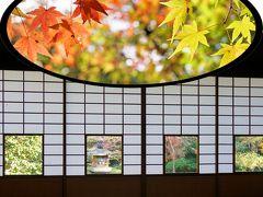 晩秋の東福寺から雲龍院あたりまで紅葉狩り♪<その2>