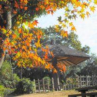 紅葉が見頃の神戸市立須磨離宮公園