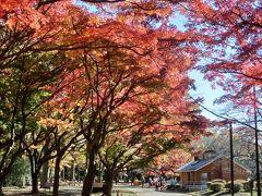 秋色に包まれた代々木公園をお散歩♪