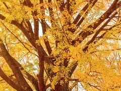 明治神宮外苑の銀杏並木が残念だったので新宿御苑へ