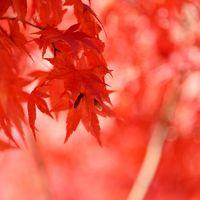 山梨 静岡 不発の紅葉狩り 地元東京(行船公園 源心庵)でリベンジしました
