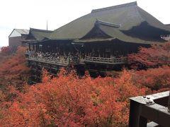 今年は一泊  京都の紅葉ライトアップ  Vol.2