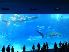 海洋博公園・美ら海水族館へ