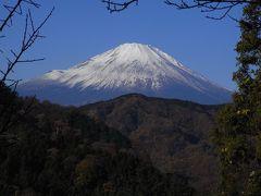 小春日和の大野山へ