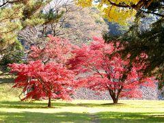 皇居の紅葉、どうでしょか(´∀` ランチは京風イタリアン! どうでしょか(´∀`