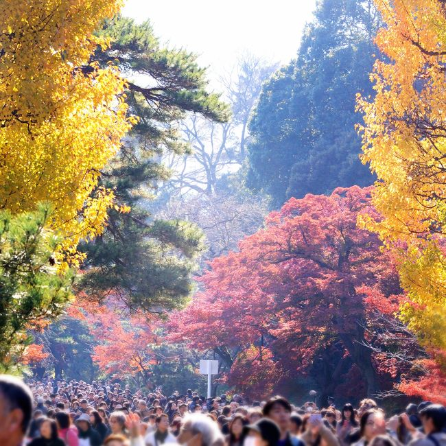 宮内庁発表 2015年秋の皇居乾通りの一般公開12月5 日から9日までの5日間で「202,820人」が訪づれました との事。昨年より約10万人少ない?<br />朝9時頃東京駅着、そのまま真っすぐ和田倉門〜坂下門へ向かいます。<br />・・・しかし、警備のDJポリスの案内が。<br />・・・「入場は桜田門からお廻り下さい。」<br />・・・え? 1km遠廻り<br />・・・高齢者は遠いよなぁ!<br />・・・ご安心ください。配慮が有ります。