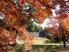 秋の皇居乾通り♪ 雅な紅葉を愛でる♪