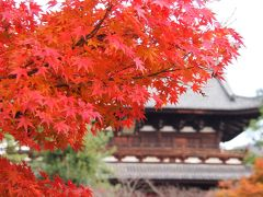 黄檗山・萬福寺の 普茶料理 と 晩秋の紅葉。