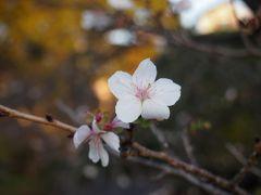 今年も丸の内のイルミを見に東京へ、、、紅葉には少し早い東御苑も歩いてみました