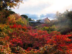 東福寺へ紅葉を見に行きました