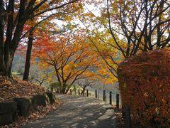 横浜・大倉山公園の紅葉