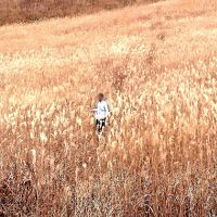 「風の谷のナウシカ」 あのラストシーンを求める旅 その3 〜ラン ランララ ラン ラン ラン〜