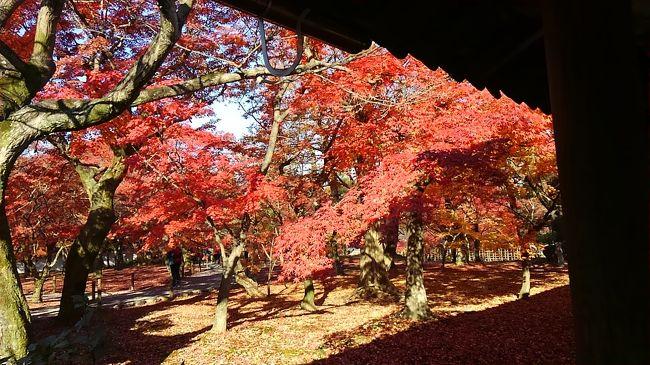 今回の旅は盛りだくさん!<br /><br />1日目は神戸を堪能。<br />『海洋博物館、カワサキワールド、神戸ポートタワー』をまわり<br />お泊りは『有馬温泉』<br /><br />2日目は姫路市内へ移動。<br />世界文化遺産の『国宝姫路城』を見学、その後酒蔵見学。<br />残念ながらアルコールが苦手な私は夫へのお土産。<br />そこから淡路島へわたります。<br />夕食は、神戸ルミナリエを見学後、ルミナス神戸でディナークルージングを楽しみます。<br /><br />3日目は神戸を離れ、『東福寺』へ移動。<br />ちょっと遅い紅葉を楽しみます。<br />その後は、京都伏見の『寺田屋』を見学し、2つ目の世界遺産 宇治『平等院』を見学します。<br /><br />今回は関西を満喫する2泊3日でした。<br /><br /><br />