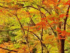 足助2/3 香嵐渓B 巴川沿い一の谷も ☆秋温暖で紅葉まばらに