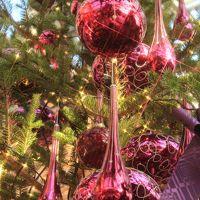 メリークリスマス 安城デンパークウインターフェステバル♪