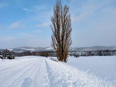 【北海道(美瑛)】 美しすぎる白銀の世界! 丘のまち美瑛の雪景色に感動~♪\(^o^)/