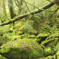 還暦夫婦 世界遺産の屋久島 5千年の縄文杉 もののけ姫の苔むす森をツアーで