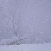 2015登り納め 〜ご機嫌斜めの谷川岳、ラッセル、ホワイトアウトで撤退〜