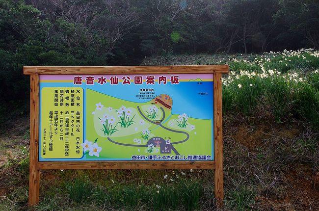 ネットで偶見た記事で島根県益田市に水仙がたくさん咲いている場所があることを知りました。<br />咲き頃を迎えたとの情報を得たので父母を連れて見に行ってきました。<br />JR山陰本線、鎌手駅から日本海に道を折れて細い道を岬に向けて走ると駐車場の先に海まで続く崖に水仙が咲き誇っていました。<br />日本海の海の青と空の青、そして緑色の葉の先に白い水仙が咲いていい匂いを放っていました。<br />同時に唐音の蛇岩を見て、その帰りに鵜ノ鼻という岬にある鵜ノ鼻古墳群を見て回りました。<br />その後、益田のゆめタウンに立ち寄り、駐車場内にあるどんどんでうどんを食べて帰路につきました。