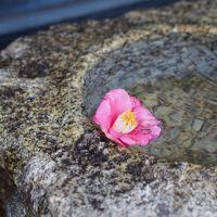 冬の鎌倉 年末恒例のお礼参りと年越しそばを味わう!