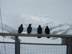 2011年、お孫ちゃま連れで、オーストリア&スイスの旅  (5-2)スイス。ユングフラウヨッホ。