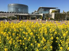 新春の千葉市花の美術館