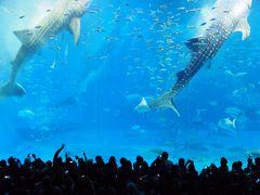 沖縄3日目 雨の海中道路と美ら海水族館