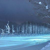 美瑛:青い池のライトアップと早朝の風景を見学・・・そして獺祭を