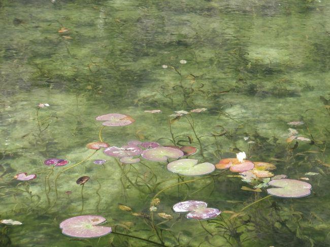 岐阜県関市に、モネ(Monet)の「睡蓮」を想起させる「モネの池」があると聞き、行ってきました。 <br />住所は,岐阜県関市板取396番地。<br />モネの池がある「根道神社」の駐車場は、10台くらいしか駐車できません<br />着いた時は、10:30 車は6台くらいあり、停めることができました。<br />帰る頃には、一杯でした。<br /><br />根道神社 10:30→ そば処森の駅 11:20→ 21世紀の森 12:15<br />→道の駅「ラステン ほらど」13:15<br /><br /> <br />