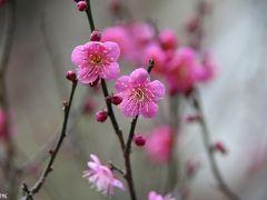 冬の北鎌倉・花散歩:明月院、東慶寺