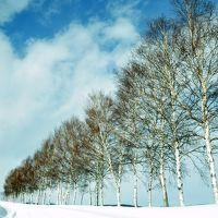 真冬の美瑛の丘巡り~美郷の名水もいただきました