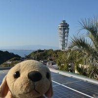 【江の島】冬の江ノ島観光、平日なのに人が多かった。階段が多くてかなり疲れたニャー。
