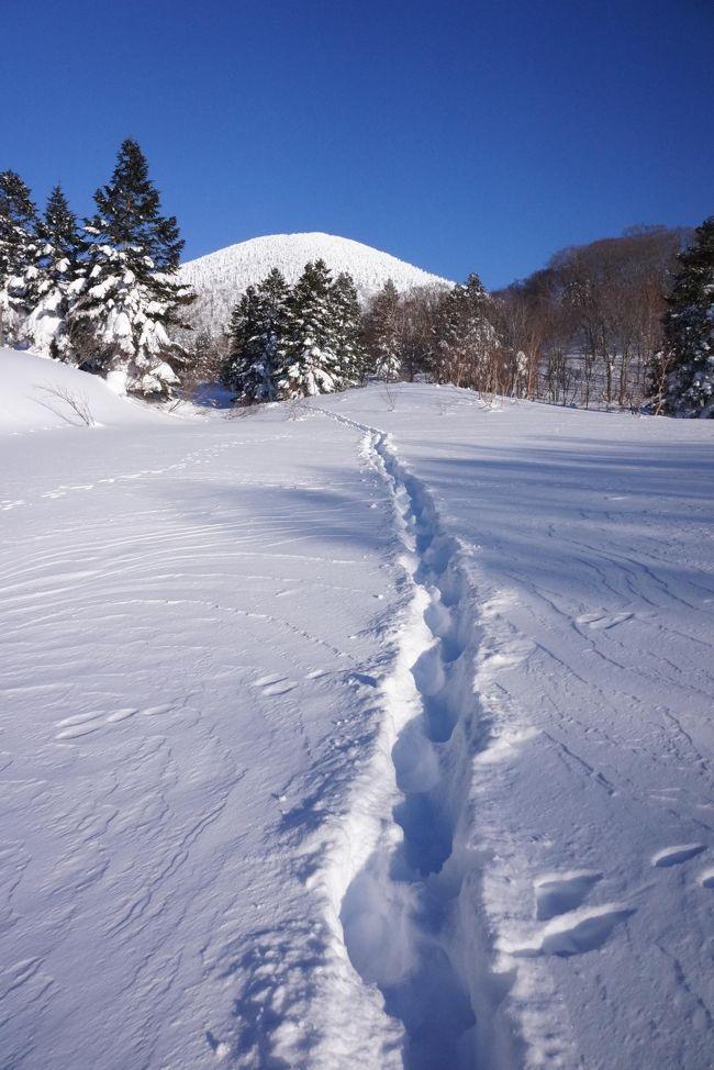 八甲田山と言えばすぐ高倉健主演の映画『八甲田山』を思い起こす私。<br />猛烈な地吹雪とか、とんでもない積雪量とか、、恐ろしい冬山のイメージ。<br /><br />はじめは、私の大好きな硫黄泉・酸ヶ湯温泉でまったりするだけの予定だったけど、<br />近くに山があると登りたくなる病気のため、八甲田山でスノーシューの予定を組み込み。<br />厳冬期の八甲田山は晴天率がとても低いらしいいので、どうなることやら?<br />映画のような死の彷徨にならなきゃいいけど・・<br />不安を抱きながら、行ってきました♪<br /><br />