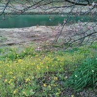 春探し 2016 みなみの桜