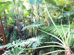 ファミリーディに小さな熱帯へ(The Bloedel Floral Conservatory)