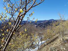 長瀞に蠟梅を見に行ったのに、雪山ハイキング!