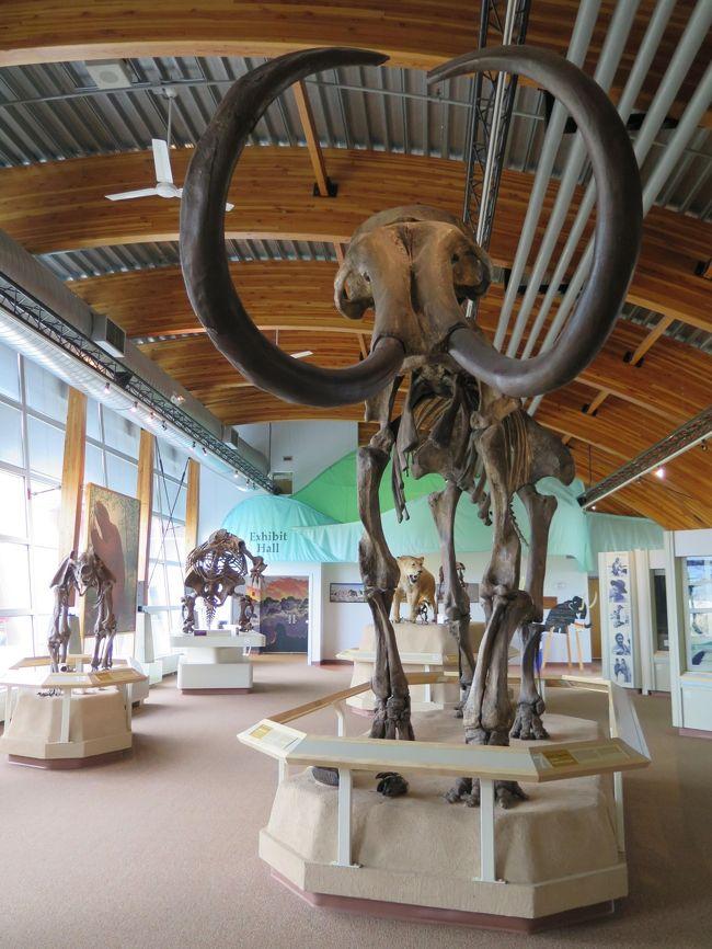 カナダのユーコン州ホワイトホースにある博物館を見てきました。<br />化石好きには必見のベリンジア博物館と、ユーコン交通博物館です。