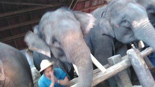 7人のツアー? タイ6日間女性一人旅 5日目 チェンマイ・象の国