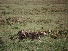 Amazing Tanzania! 4 やっぱり「ンドゥトゥ」は最高~