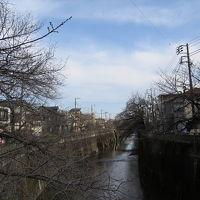 石神井川でバードウォッチング [2015](1)