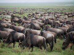 Amazing Tanzania! 5 360度ヌーヌーヌー時々シマウマ(笑)