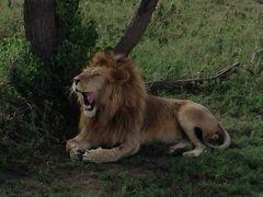 Amazing Tanzania! 7 サファリは最高 沢山のドラマをありがと~ I`ll be back!