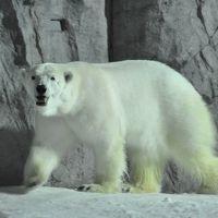 夜の旭山動物園~「雪明りの動物園」を見学しました