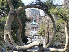 真冬の「冬牡丹」と上野公園の社寺♪ Vol1 上野公園の「寛永寺清水観音堂」と早咲き桜♪