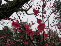 2016早春、金沢と五箇山巡り:2月20日(4/8):金沢(4/5):、兼六園、鶺鴒島、成巽閣、随身坂口、金沢神社