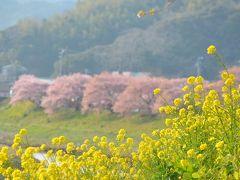 みなみの桜と菜の花まつり 2016.2.27