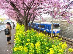 '16 三浦海岸河津桜&三崎さんぽ1 京急電車と三浦海岸桜まつり